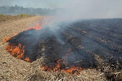 Burning Sugar Cane Print by Jim West