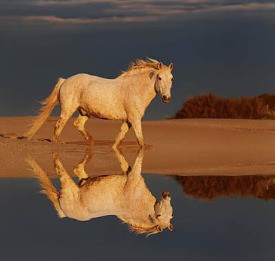 Camargue Horse On Beach At Sunrise Print by Adam Jones