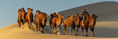 Camel Photograph - Camel Caravan In A Desert, Gobi Desert by Panoramic Images