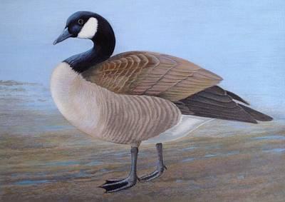 Canada Goose  Original by Alan Suliber