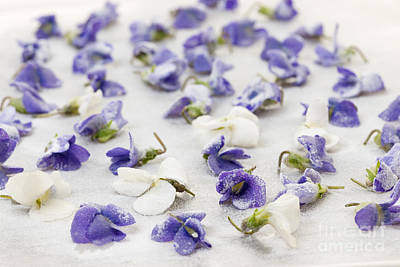 Candied Violets Print by Elena Elisseeva