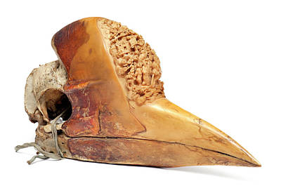 Artefact Photograph - Carved Hornbill Skull by Natural History Museum, London