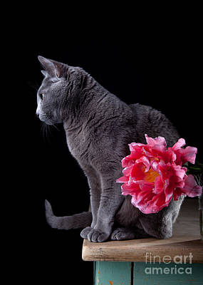 Cat And Tulip Print by Nailia Schwarz