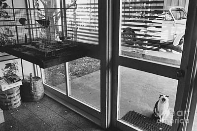 Animal Portraiture Photograph - Cat Crying by Lynn Lennon