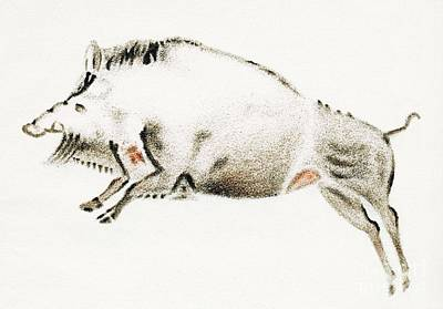 Hematite Photograph - Cave Painting Of A Boar, Artwork by Sheila Terry