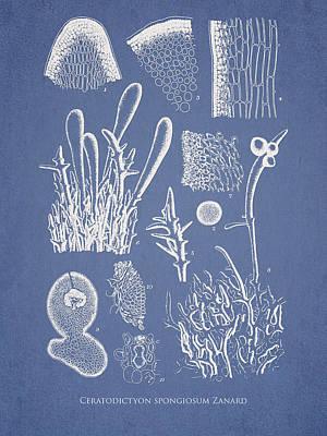 Alga Digital Art - Ceratodictyon Spongiosum Zanard by Aged Pixel
