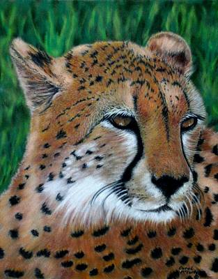 Cheetah Painting - Cheetah by Carol McCarty