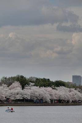 Vacation Photograph - Cherry Blossoms - Washington Dc - 011311 by DC Photographer