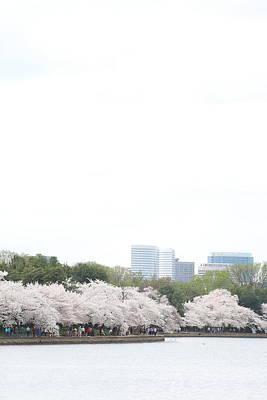 America Photograph - Cherry Blossoms - Washington Dc - 011314 by DC Photographer