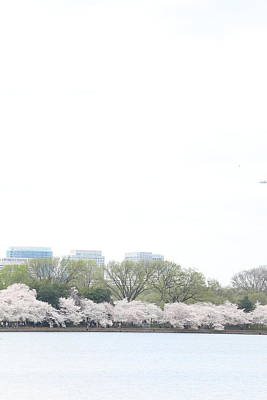Tidal Photograph - Cherry Blossoms - Washington Dc - 011318 by DC Photographer