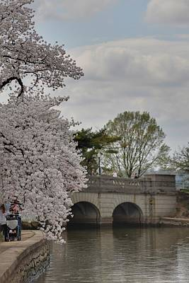 Vacation Photograph - Cherry Blossoms - Washington Dc - 011328 by DC Photographer