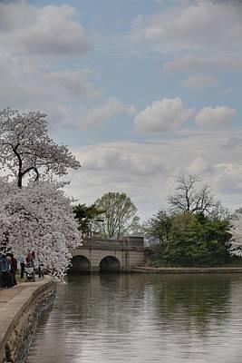 Landscape Photograph - Cherry Blossoms - Washington Dc - 011329 by DC Photographer