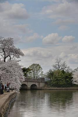 Tidal Photograph - Cherry Blossoms - Washington Dc - 011330 by DC Photographer