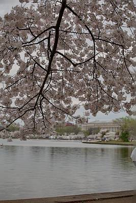 Cherry Blossoms - Washington Dc - 011337 Print by DC Photographer