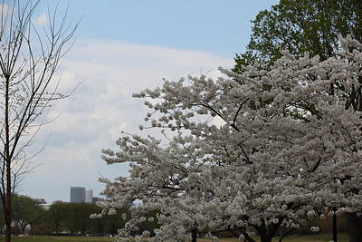 Outdoors Photograph - Cherry Blossoms - Washington Dc - 011344 by DC Photographer