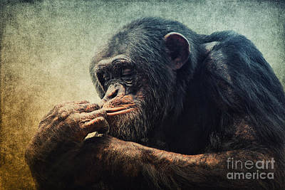 Chimpanzee Mixed Media - Chimpanzee by Angela Doelling AD DESIGN Photo and PhotoArt