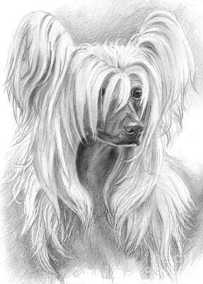 Dog Drawing - Chinese Crested by Tobiasz Stefaniak