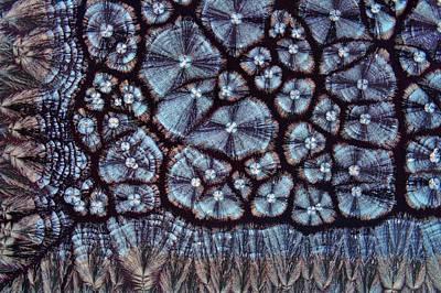 Cholesterol Crystals Print by Antonio Romero