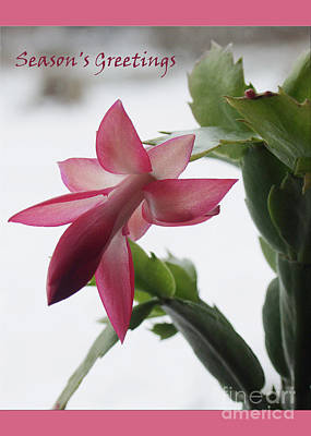Photograph - Christmas Cactus Season's Greeting Card   #1   by Andrew Govan Dantzler