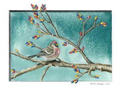 Christmas Redpoll Print by Gina Gahagan