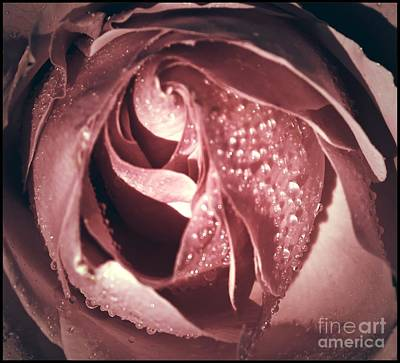 Close-up Of A Rose Seen From Above  Original by Stefano Senise