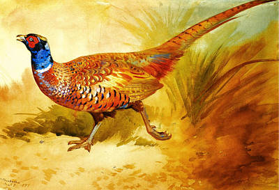 Artistic Painting - Cock Pheasant by Celestial Images