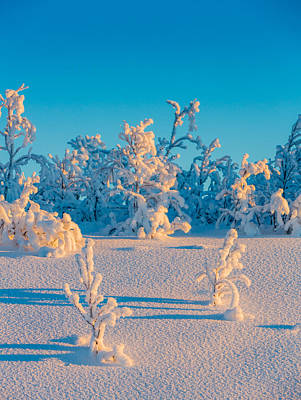 Cold Temperature Photograph - Cold Winter In Lapland Sweden by Panoramic Images