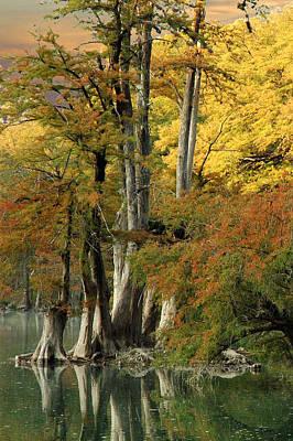 Colorful Cypress Print by Robert Anschutz