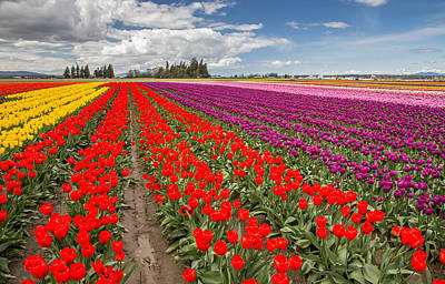Colorful Field Of Tulips Print by Pierre Leclerc Photography