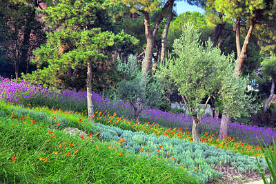 Plant Photograph - Colorful Park With Flowers by Michal Bednarek