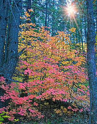 West Fork Digital Art - Colorful Rays by Brian Lambert