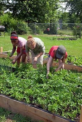 Community Garden Volunteers Weeding Print by Jim West
