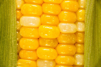 Corn Print by Steve Gadomski