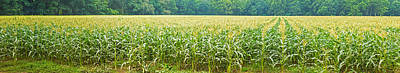 Cuyahoga Photograph - Cornfield, Cuyahoga Valley National by Panoramic Images
