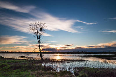 River Photograph - Cosumnes River Preserve by Lee Harland