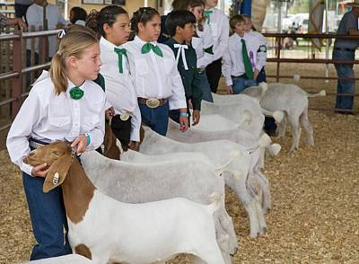 Goat Photograph - County Fair by Jim West