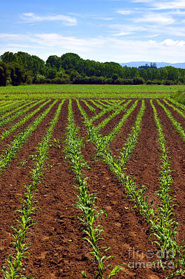 Fertilize Photograph - Cultivated Land by Carlos Caetano