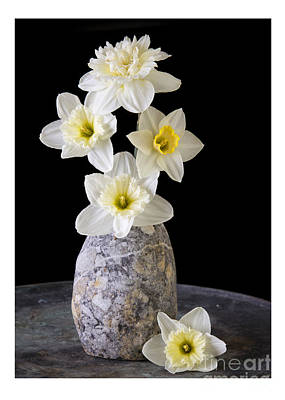 Hardy Photograph - Daffodils by Edward Fielding