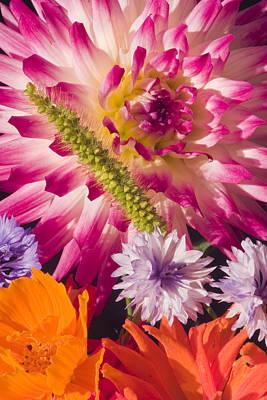 Dahlia Zinnia Bachelor's Buttons Flowers Print by Keith Webber Jr