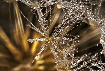 Brite Photograph - Dandelion In Dew by Iris Richardson