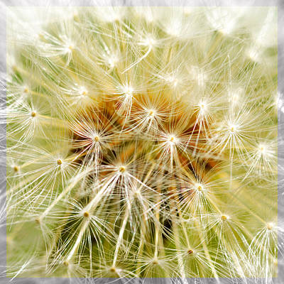 Spring Scenes Mixed Media - Dandelion by Toppart Sweden