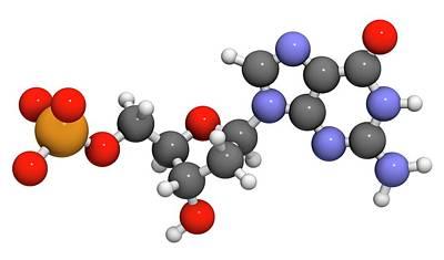 Deoxyguanosine Monophosphate Molecule Print by Molekuul