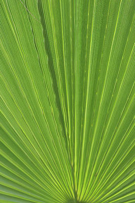 Detail Of Palm Tree Frond Print by Anna Miller