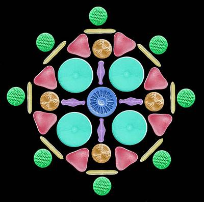Phytoplankton Photograph - Diatoms And Radiolaria by Steve Gschmeissner