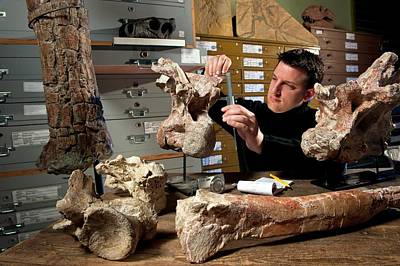 Paleozoology Photograph - Dinosaur Fossil Research by Philippe Psaila