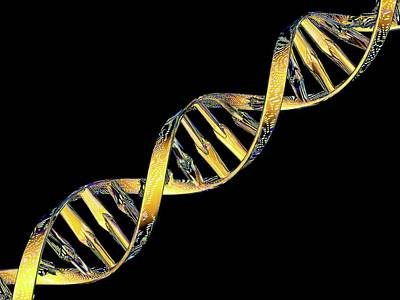 Heredity Photograph - Dna Double Helix Reflecting Microarray by Pasieka