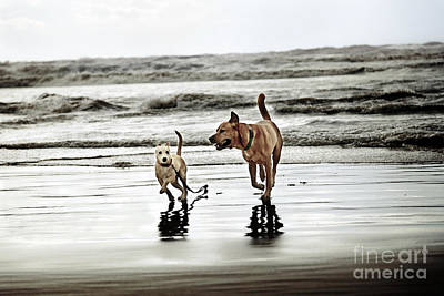 Dog And Puppy Running On Shoreline Print by Eldad Carin