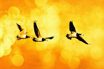 Duck Mixed Media - Ducks Flying by Toppart Sweden