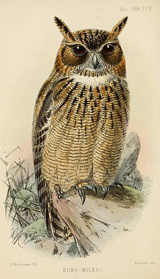 Eagle Owl Print by J G Keulemans