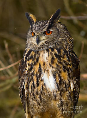 Owl Photograph - Eagle Owl by Les Palenik